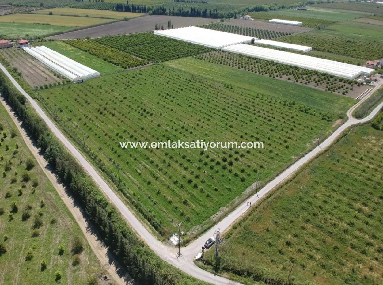 Ortaca Eskiköy De 26700 M2 Bakımlı Limon Bahçesi Satılık
