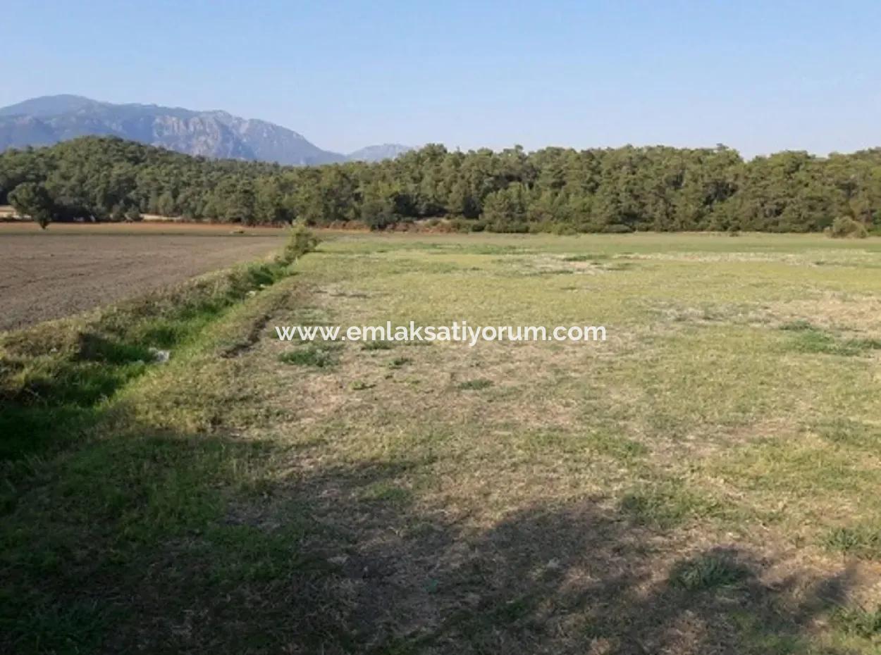 Muğla Köyceğiz Köyünde Satılık Sera Yapmaya Uygun Arazi