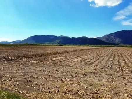 Muğla Ortaca Güzelyurtta Satılık Verimli Kelepir Arazi