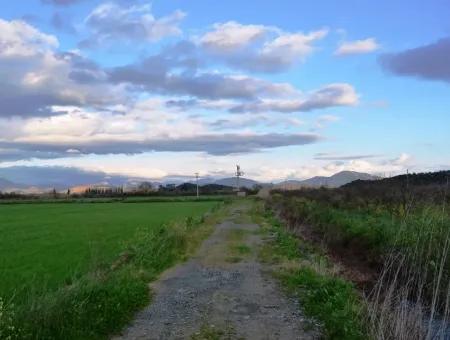 Ortaca Mergenlide Satılık Müstakil Verimli Kelepir Arazi